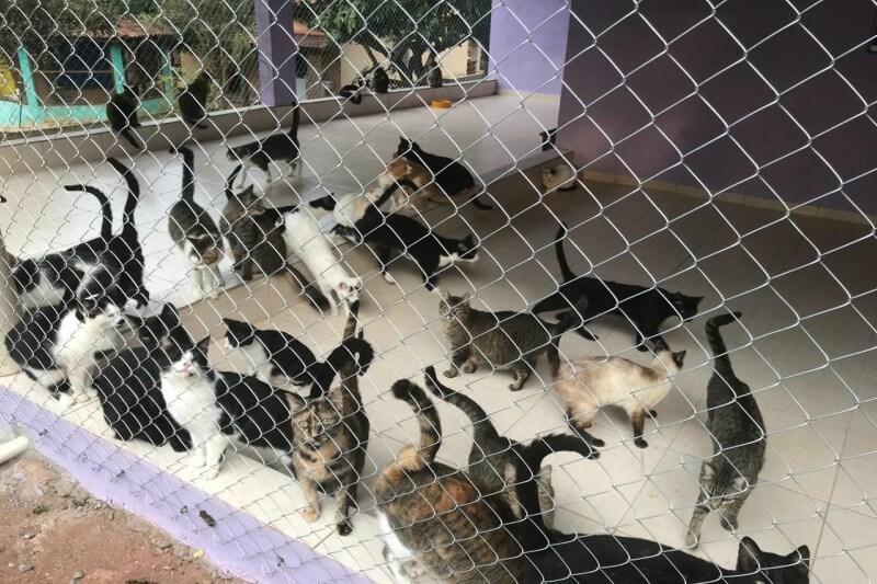 ONG ajuda a resgatar animais de rua na Zona Leste
